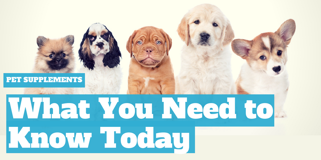 Pet Supplements: What You Need to Know Today