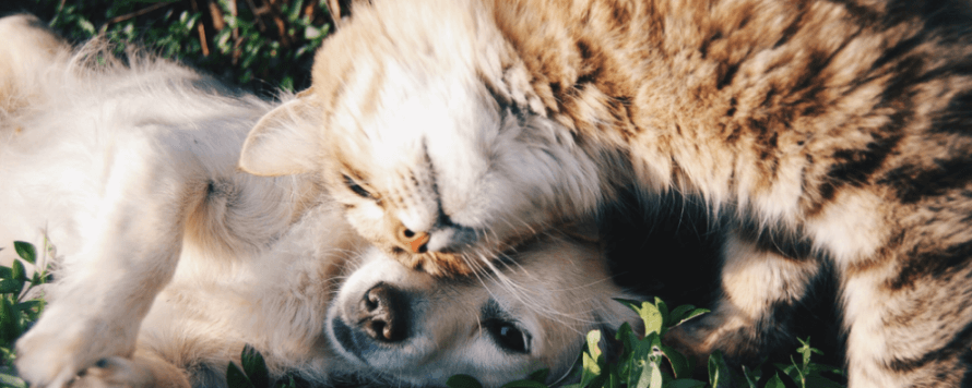 A dog and cat enjoy a mid-afternoon cuddle session.