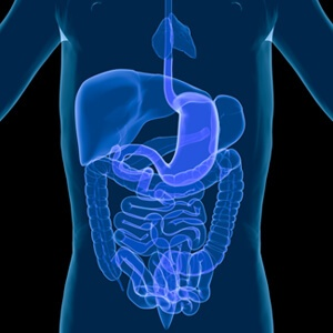 Digestive Health Supplements Manufacturing Trends