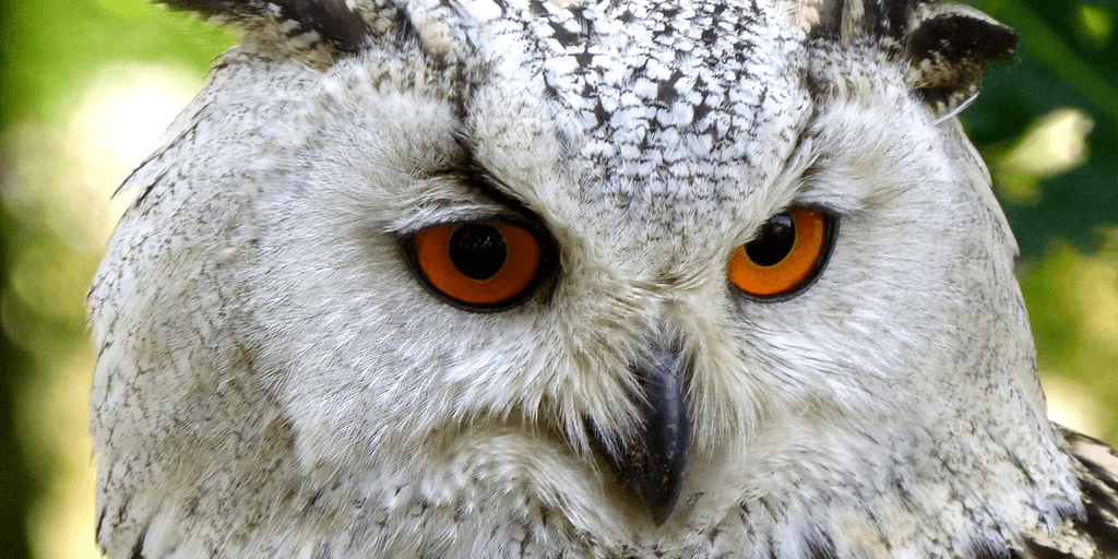 OWL The CRN Dietary Supplement Registry Beta
