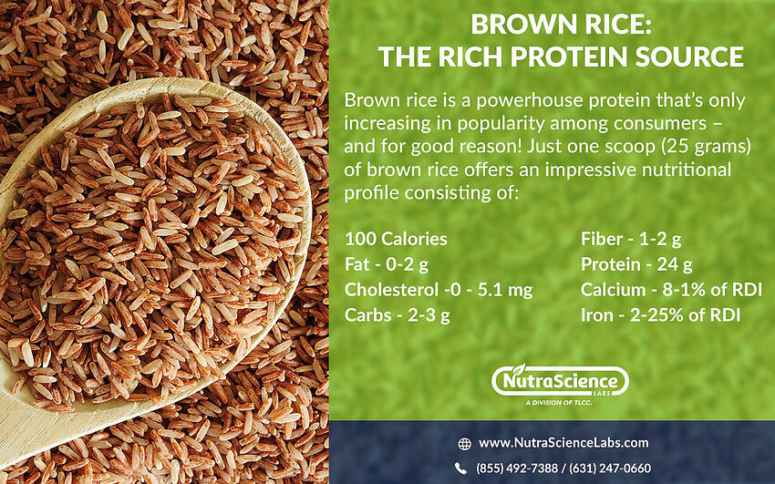 Brown Rice Protein Nutritional Profile Infographic