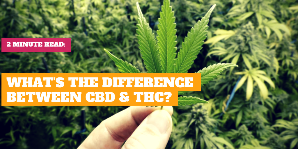 What's the Difference Between CBD & THC?