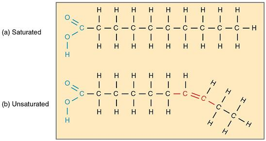 saturated-and-unsaturated-omega-fatty-acids