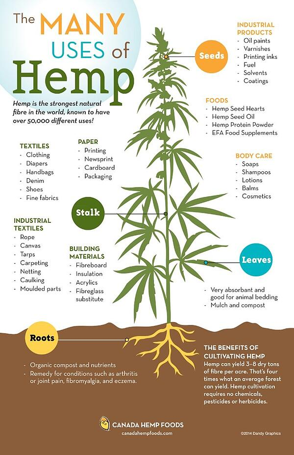 The Many Uses of Hemp Infographic