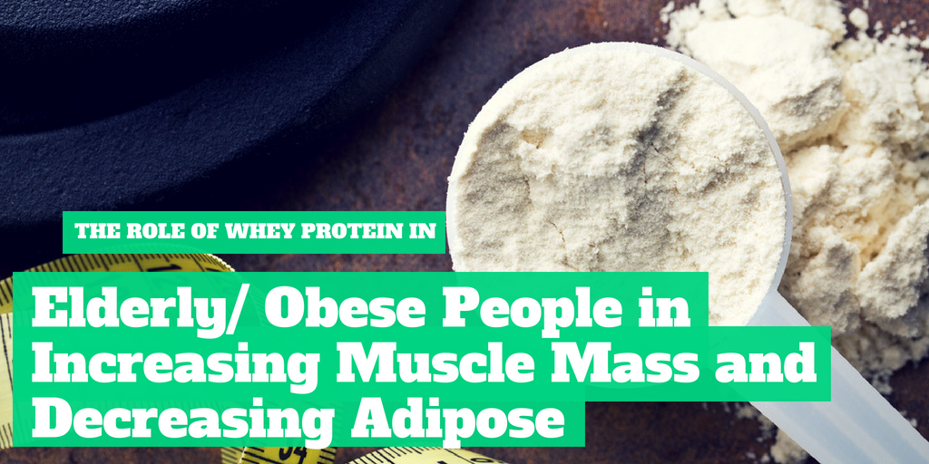The Role of Whey Protein In Elderly/Obese People in Increasing Muscle Mass and Decreasing Adipose