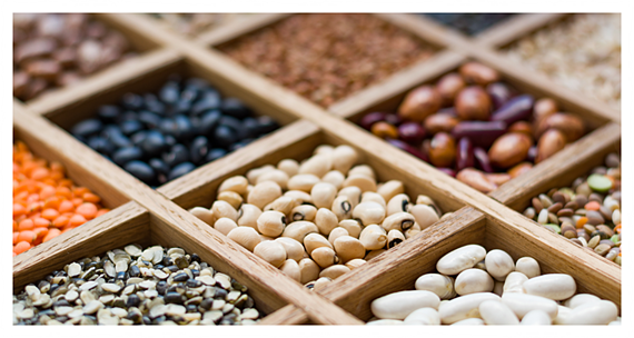 What Is Plant-Based Protein