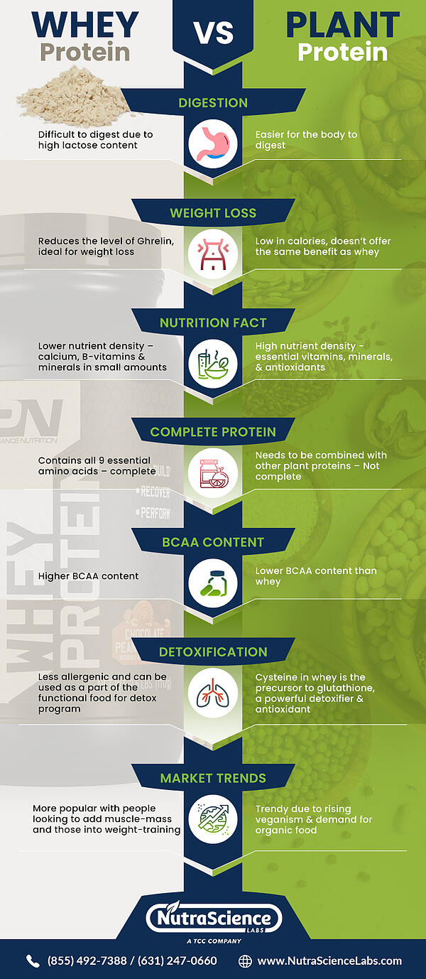 Whey Protein vs. Plant Protein Infographic